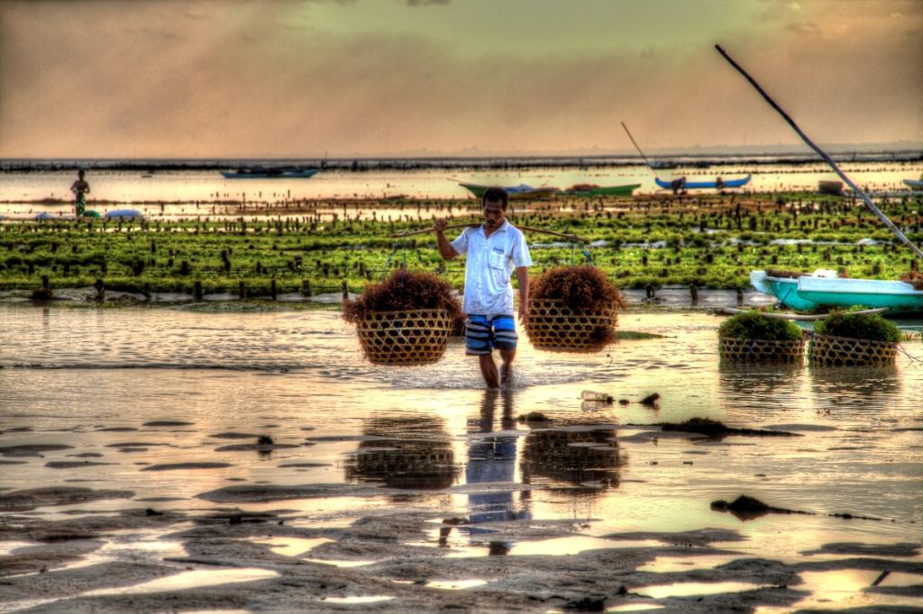seaweed farmer 3