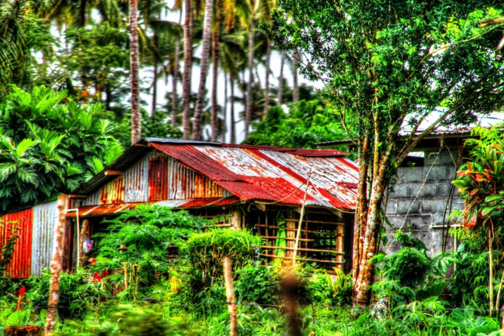 jungle living