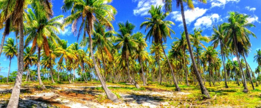 cropped-palms.jpg