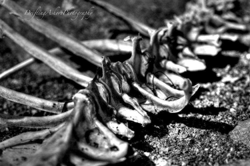 penguin bones