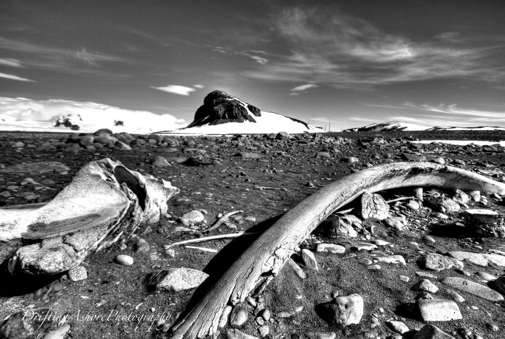 whale bones2